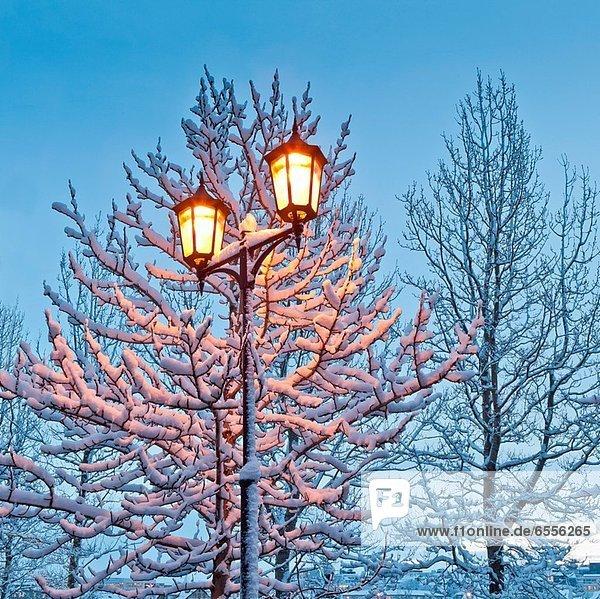 Reykjavik  Hauptstadt  bedecken  Schneeflocke  Lampe  Auswirkung  groß  großes  großer  große  großen  Island  Schnee