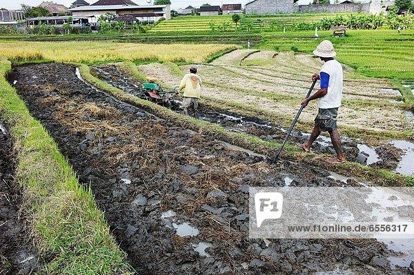 ernten  Vielfalt  Pflanze  Dorf  Reis  Reiskorn  Landwirtin  anpflanzen