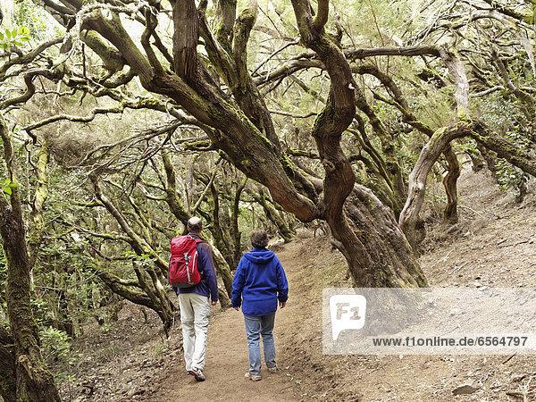 Spanien  Paar Wanderungen durch den Lorbeerwald im Garajonay Nationalpark