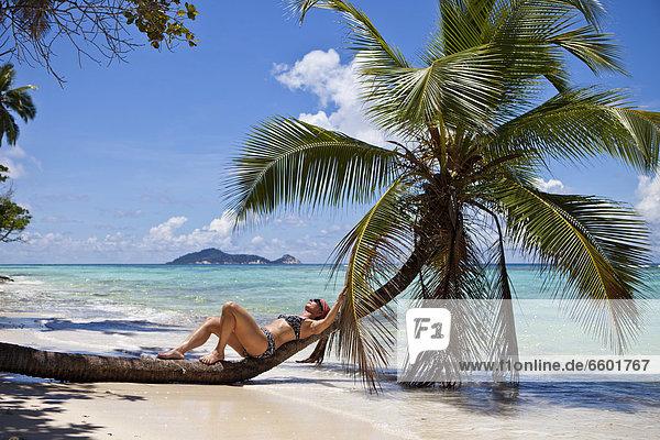 Frau Entspannung Bikini Baum Palme Indischer Ozean Indik