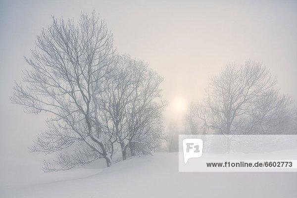 Winterlandschaft im Nebel am Gaisberg  Salzburger Land  Österreich