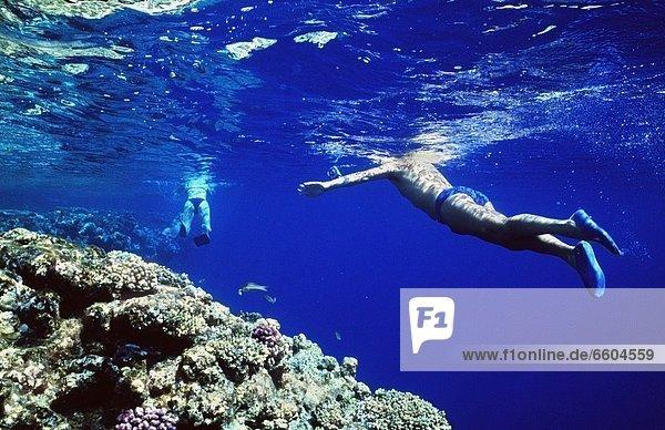 Ecke Ecken schnorcheln vorwärts Rotes Meer Riff