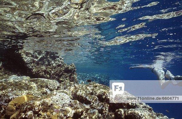 Ecke  Ecken  Unterwasseraufnahme  schnorcheln  vorwärts  Mädchen  Riff