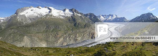 Panorama vom Großen Aletschgletscher  Mörel  Wallis  Goms  Schweiz  Europa