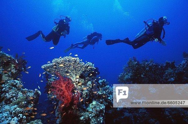 Nostalgie 3 schwimmen Taucher Rotes Meer