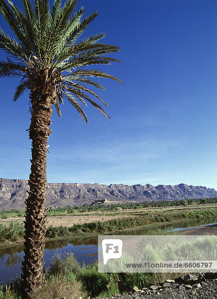 Palm Tree In Moroccan Landscape With Mountains In Background