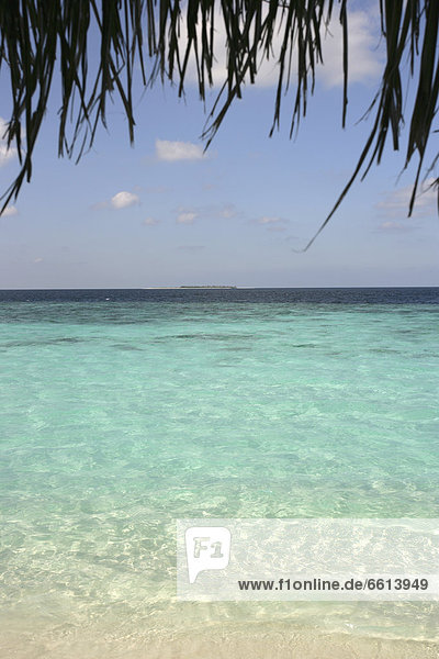 Palm tree over ocean  Dhuni Kolhu Island Maldives