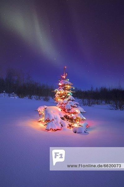 glühend  Glut  Baum  unterhalb  Weihnachten  Polarlicht