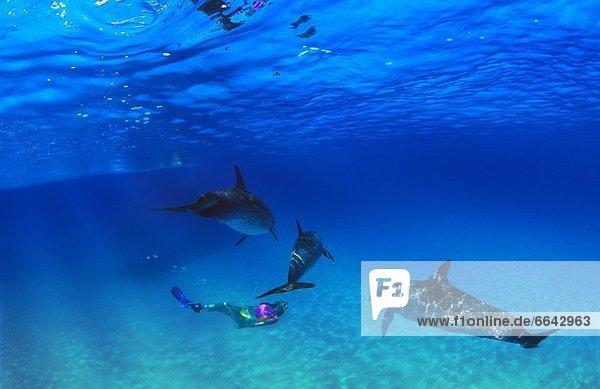 Frau  schnorcheln  Delphin  Delphinus delphis  Atlantischer Ozean  Atlantik  Punkt