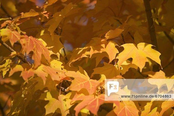Farbaufnahme  Farbe  Baum  Herbst  voll