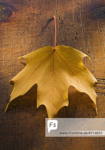 hoch  oben  nahe  Pflanzenblatt  Pflanzenblätter  Blatt  Herbst