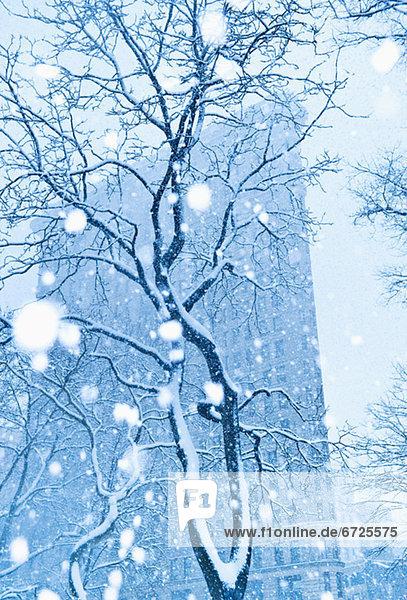Städtisches Motiv  Städtische Motive  Straßenszene  Straßenszene  Tischset  Baum  Schnee