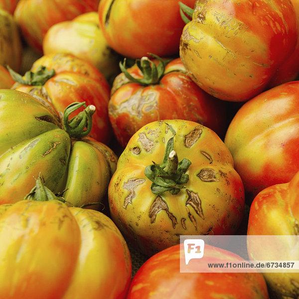 Tomate  schießen  Studioaufnahme  Erbe