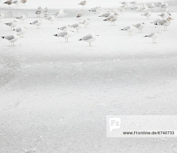 USA  New York State  Rockaway Beach  seagull on beach in winter