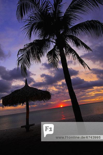 Strand  Sonnenuntergang  Baum  Silhouette  Sonnenschirm  Schirm  Palme  Aruba