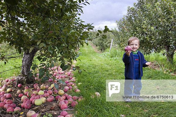 Junge - Person  geselliges Beisammensein  jung  Obstgarten  Apfel