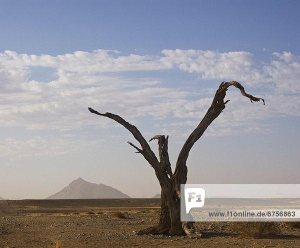 Namibia Namib Afrika