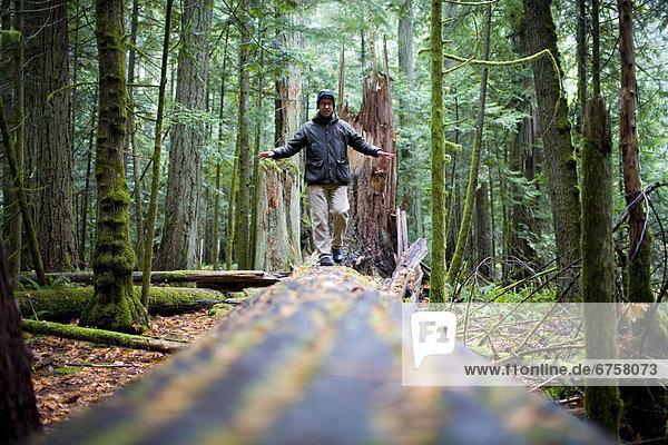 Mann  gehen  Baum  fallen  fallend  fällt  Cathedral Grove  British Columbia  MacMillan Provincial Park  Vancouver Island