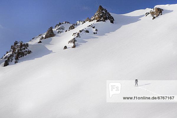 Espe  Populus tremula  Vereinigte Staaten von Amerika  USA  hoch  oben  Berg  gehen  Mensch  Colorado  Schnee