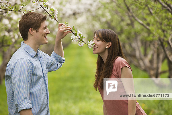USA  Utah  Provo  Young couple smelling blossom in orchard