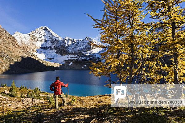 See  Ignoranz  wandern  Berg  Yoho Nationalpark  British Columbia