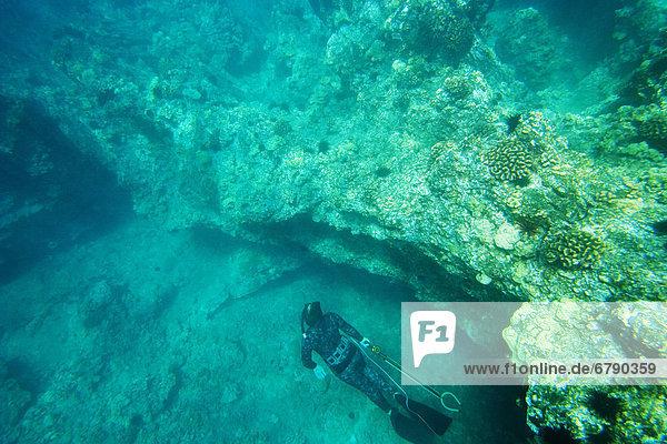 Hawaii  Maui  Makena  Spearfisher Unterteil der Ocean Reef erkunden.