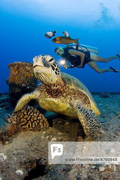 Wasserschildkröte Schildkröte über grün Riff