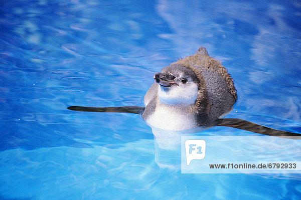 Wasser  fließen  türkis  Baby  Pinguin Wasser ,fließen ,türkis ,Baby ,Pinguin