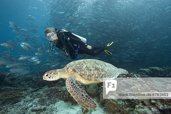 Wasserschildkröte Schildkröte grün schwimmen