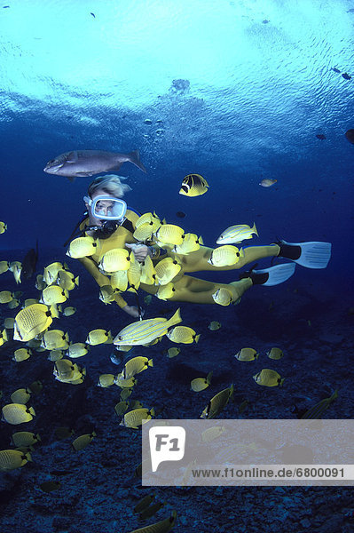 Hawaii,  Woman diver and millet seed Butterflyfish school,  surface visible A81F