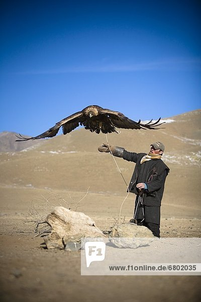 Man Training Eagle  Terelj Village  Mongolia