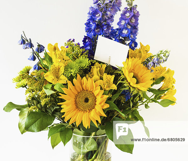 Farbaufnahme  Farbe  Blume  Bündel  Blumenvase  befestigen