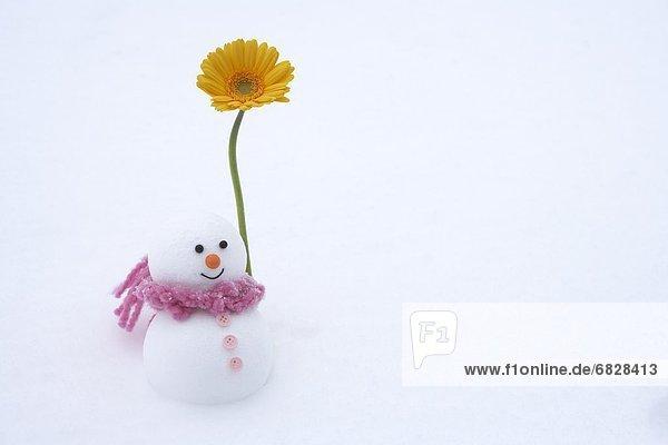 Snowman with gerbera daisy