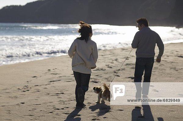 Strand  rennen  Hund