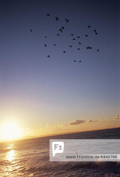 fliegen  fliegt  fliegend  Flug  Flüge  über  Meer  Vogel  Vogelschwarm  Vogelschar  Japan