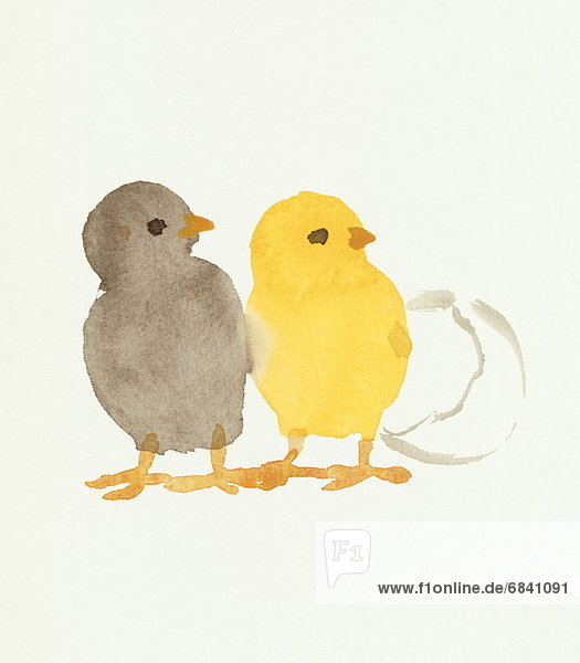 Two Chicks  Water Color Painting Two Chicks, Water Color Painting