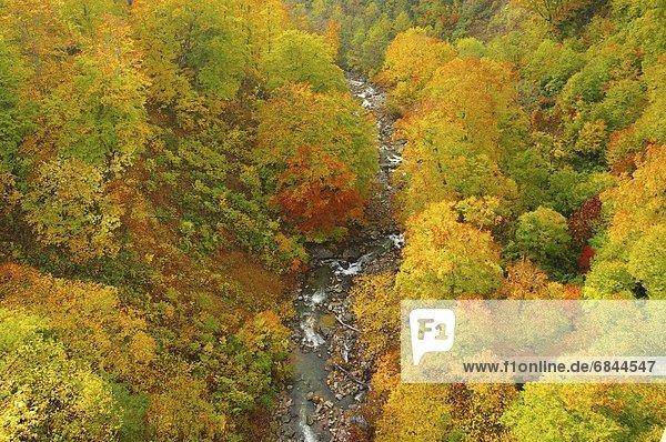 hoch  oben  Berg  Baum  Herbst  Ansicht  Flachwinkelansicht  Winkel  Japan