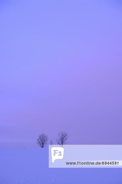 Baum  Schnee  Morgendämmerung  Feld  2  Hokkaido  Japan  Kamikawa