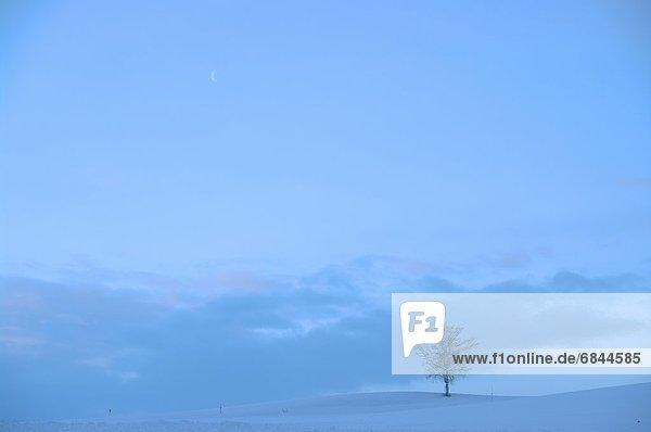 Baum  Schnee  Feld  1  Hokkaido  Japan  Kamikawa