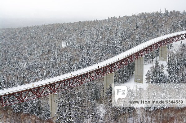 Winter  Wald  Hokkaido  Japan