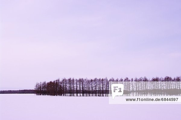Baum  Schnee  Feld  Lärche  Hokkaido  Japan