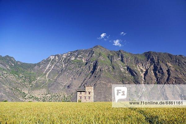 hinter, Berg, Wohnhaus, klein, Ziegelstein, Feld, Reis, Reiskorn, China, Sichuan