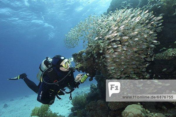 Unterwasseraufnahme Rotes Meer Unterwasseraufnahme
