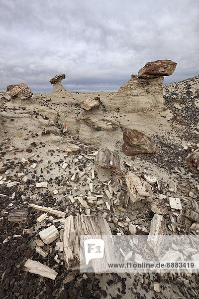 Petrified wood in the badlands on a cloudy day  San Juan Basin  New Mexico  United States of America  North America