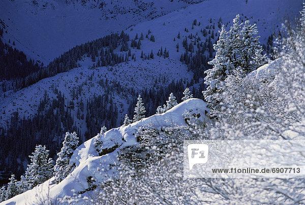 bedecken  Baum  Landschaft  Draufsicht  Schnee  Schweiz