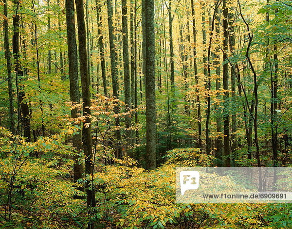 Great Smoky Mountains National Park  Tennessee  USA