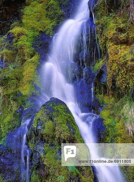 Yoho Nationalpark  British Columbia  Kanada  Gebirgsbach Yoho Nationalpark ,British Columbia ,Kanada ,Gebirgsbach