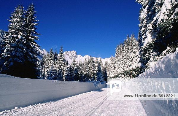 Winter Scenic  Austria
