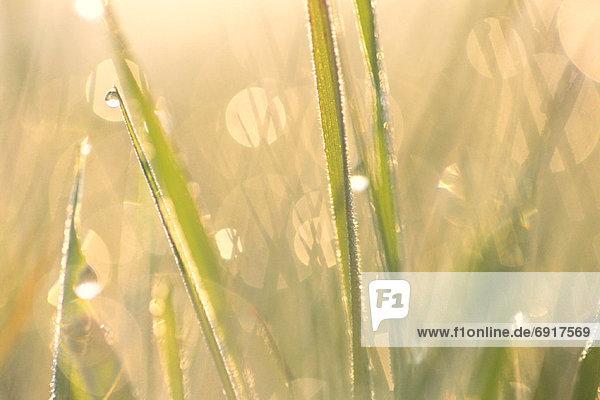hoch  oben  nahe  Tau  Tautropfen  Gras