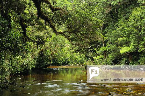 Oparara River  Kahurangi National Park  New Zealand